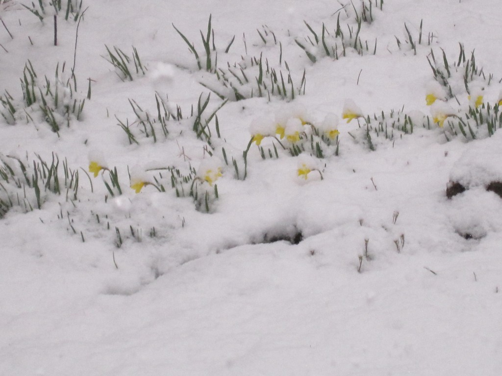 'Little Gems' in last snow